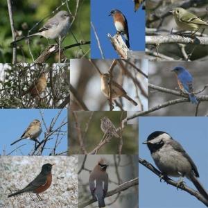 Wendys Bird Mix