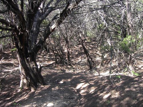 Woods ANC